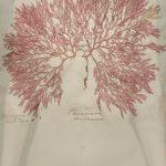 Jenny Pollack bloodlines print